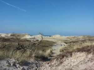 Detox Groet duinen